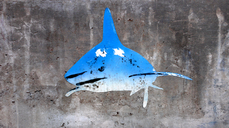 Shark (Photo © Jaime Rojo)
