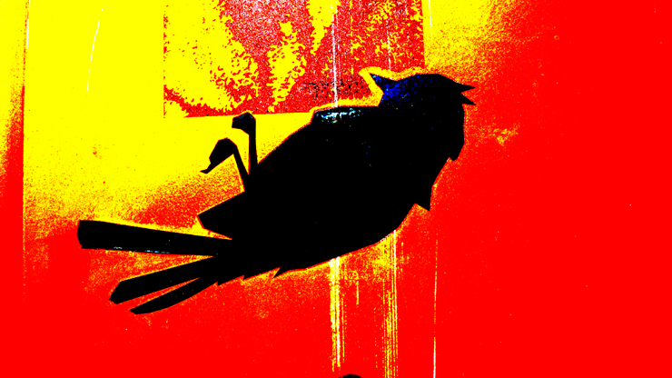 brooklyn-street-art-bird-jaime-rojo-11-10