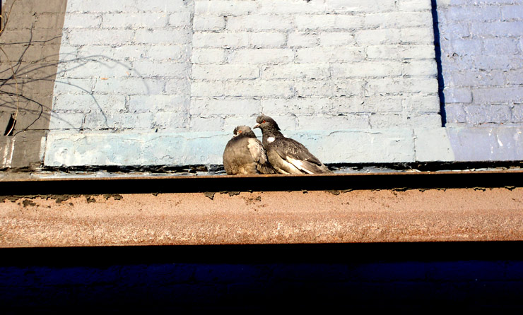 brooklyn-street-art-valentines-doves-jaime-rojo-02-11-web