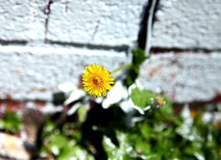 brooklyn-street-art-veng-rwk-jaime-rojo-bos-2011-06-11-web-7