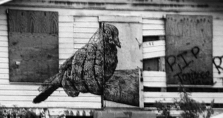Brooklyn-Street-Art-Gaia-BW-Miami-Sept-2011-1