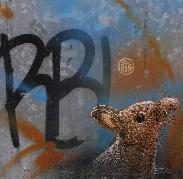 brooklyn-street-art-c215-steven-p-harrington-09-14-14-web