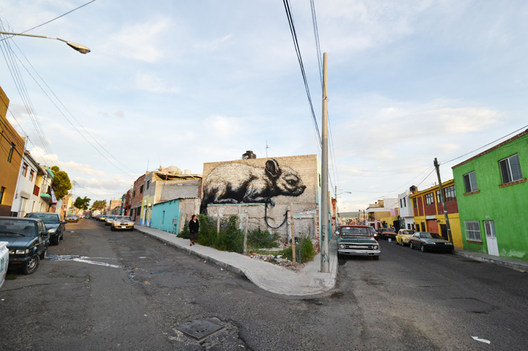 brooklyn-street-art-ROA-QUERETARO-2015-web-1