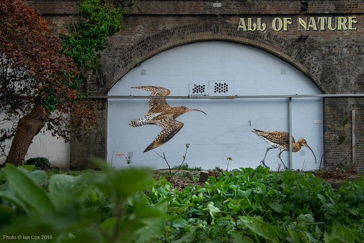 brooklyn-street-art-Endangered13_atm_Ian_Cox_london-04-2016-web-4