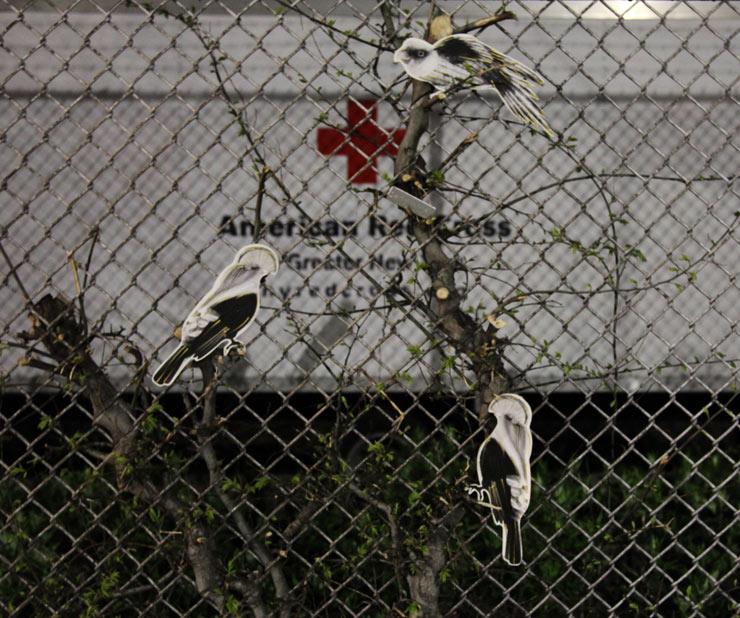 brooklyn-street-art-birds-jaime-rojo-05-15-16-web-2